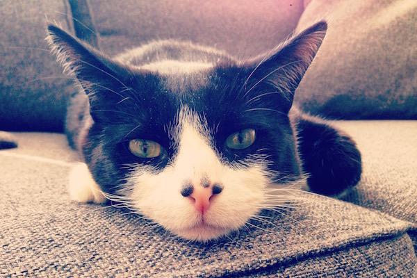 Mobile first copywriting en grappige kattenfilmpjes